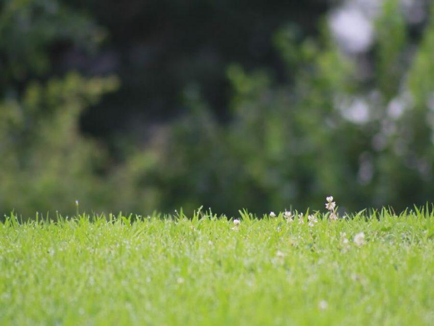 芝に水が滴る様子